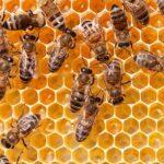 خواص درمانی تولیدات زنبور عسل