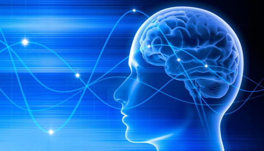 مغز انسان چطور خاطرات را طبقهبندی میکند؟