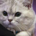آموزش قدم به قدم استفاده از توالت برای گربه