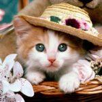 روشهای مراقبت بهداشتی از گربهها