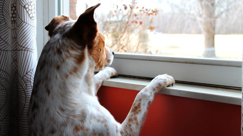 چطور بر دلواپسی تنها گذاشتن سگ در خانه غلبه کنیم؟