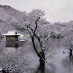 لحظهای آرامش؛ بهار تابستان پاییز زمستان و بهار
