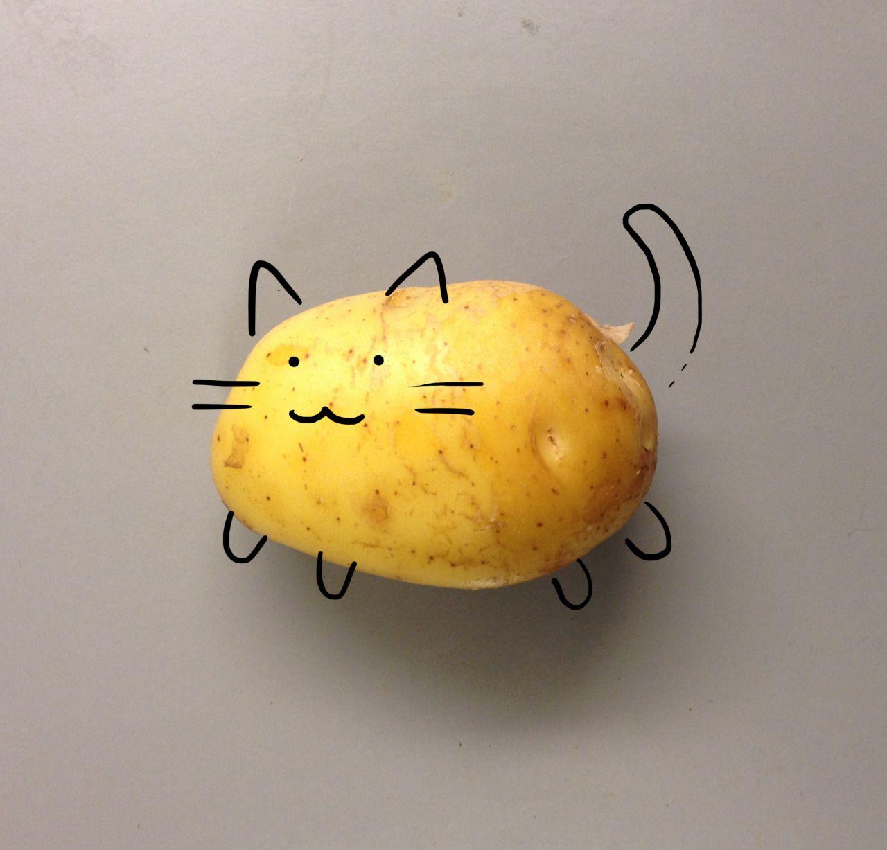 چرا گربهها سیبزمینی دوست ندارند؟