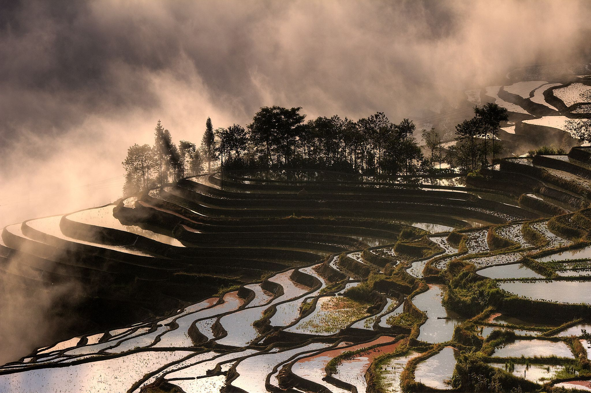 انعکاس نور طلوع خورشید در شالیزارهای برنج یویانگ کشور چین. عکاس:  CEZARY FILEW
