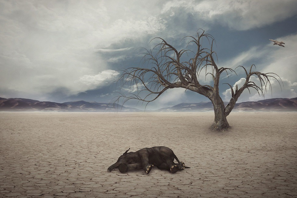 اثرات تغییر اقلیم و گرمایش جهانی از دیدگاه شیلات و محیط زیست