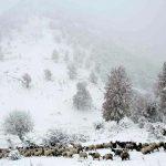 سفر به جنگلهای برفی مازندران، گلستان و گیلان