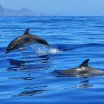 دلفین از گاو هم توانمندتر است
