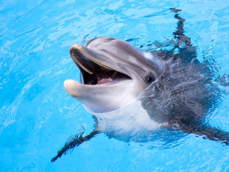 از دلفین و نوزاد دلفین بیشتر بدانید
