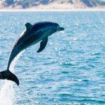 با دلفینها این حیوانات باهوش بیشتر آشنا شوید
