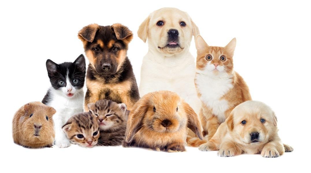 بهترین حیوانات خانگی برای زندگی در آپارتمانها کدامند؟