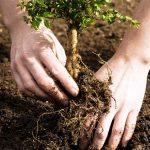 با جستجو در اینترنت درخت بکارید!
