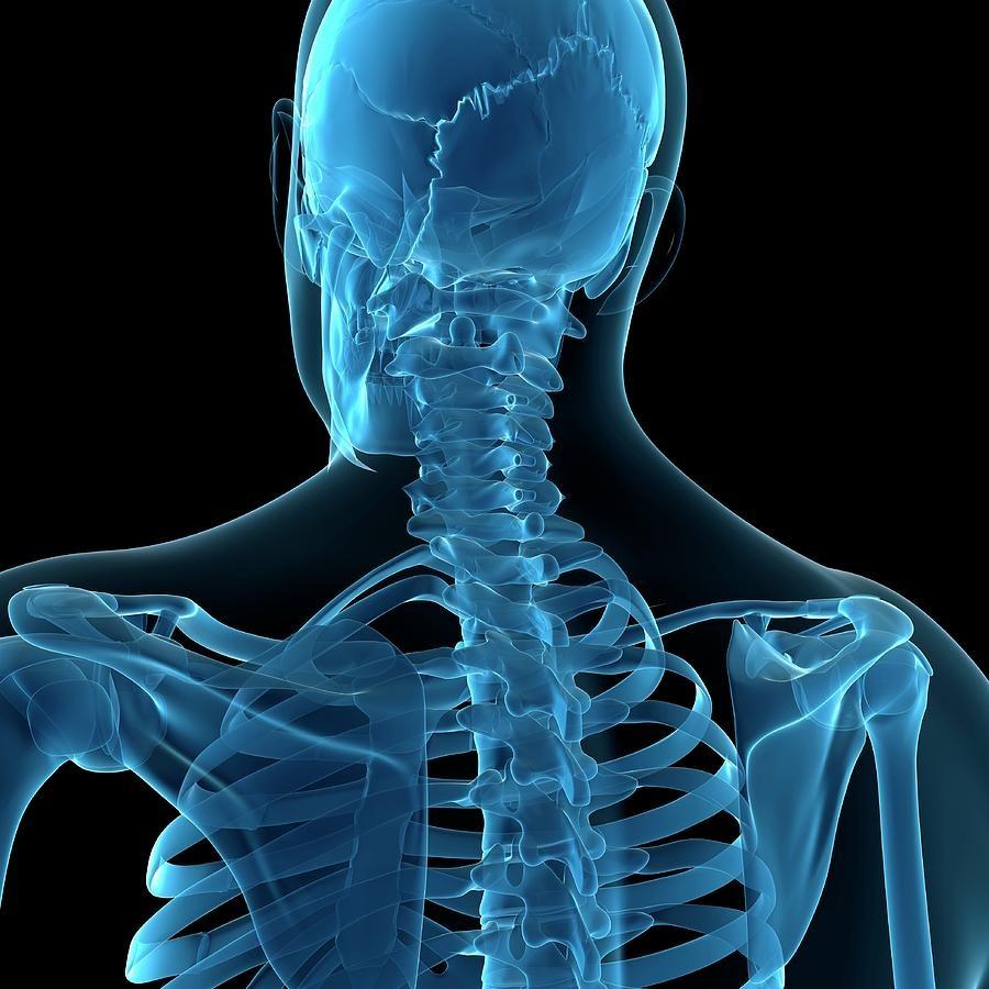 يک استخوان به بدن انسان اضافه شد