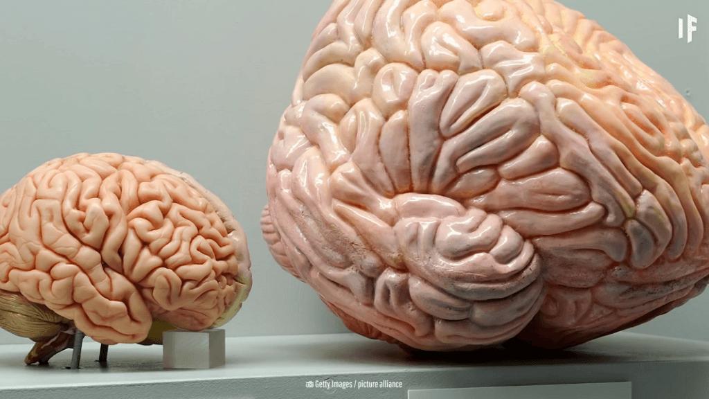 مغز انسان و مغز نهنگ