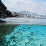 چه میشد اگر آب تمام دریاها و اقیانوسها شیرین بود؟