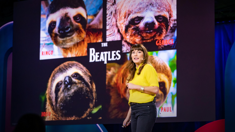 زندگی عجیب و غریب کندترین پستاندار جهان: تنبل