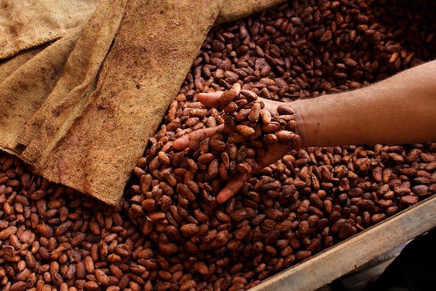 کاکائو چه خواص و مضراتی برای بدن انسان دارد؟
