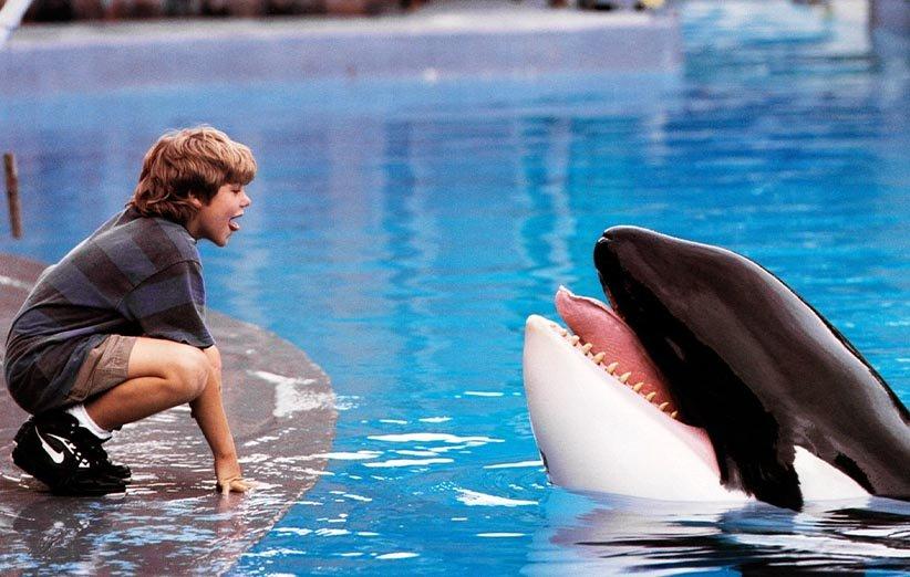 ویلی آزاد ۱۹۹۳ حیوانات خانگی
