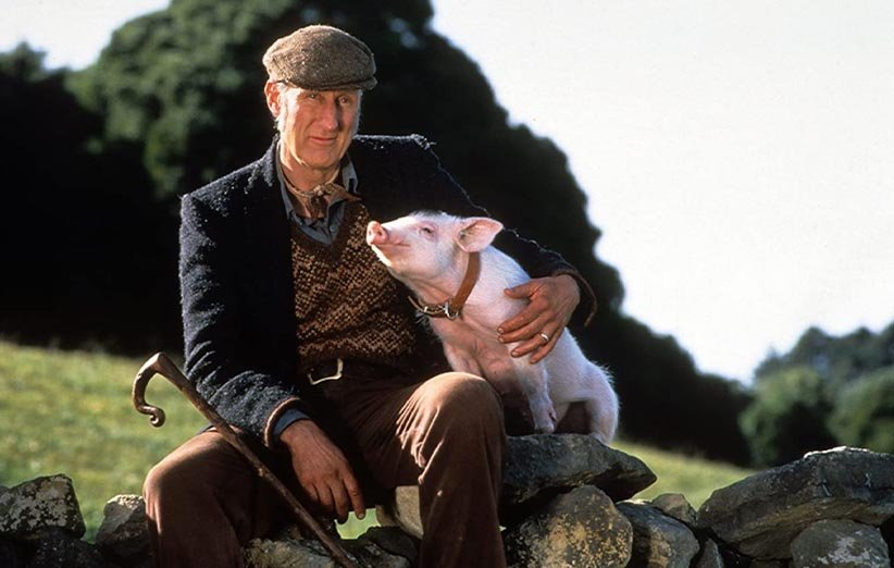 بیب حیوانات خانگی ۱۹۹۵