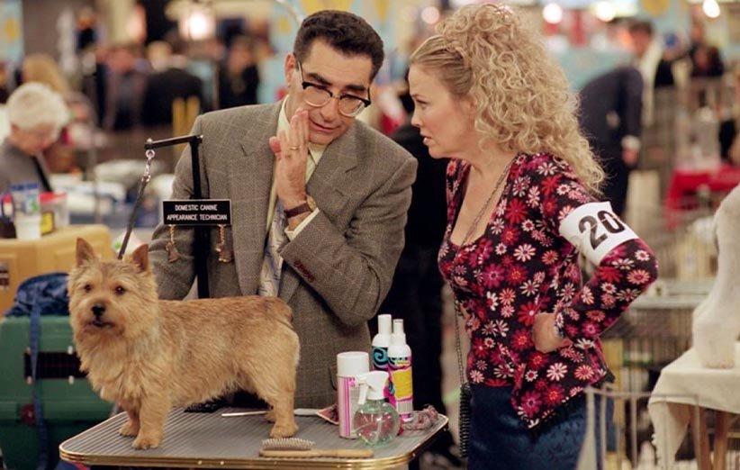 بهترین در نمایش حیوانات خانگی ۲۰۰۰