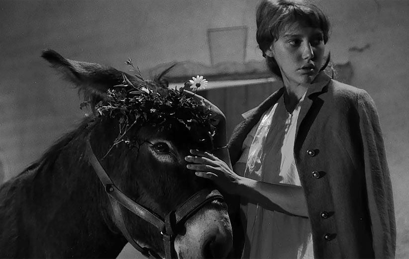 ناگهان بالتازار ۱۹۶۱ حیوانات خانگی