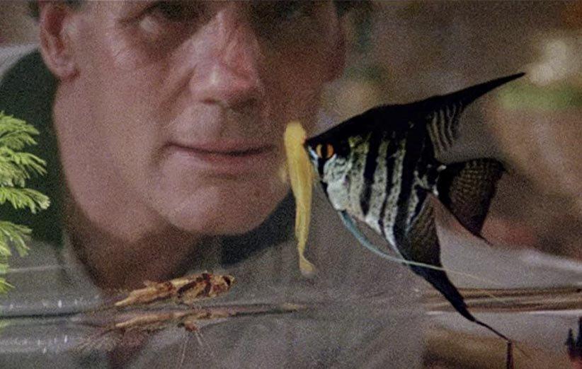 ماهیای به نام وندا ۱۹۸۸ حیوانات خانگی