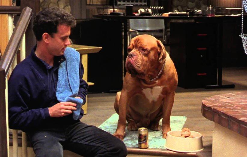 ترنر و هوک ۱۹۸۹ حیوانات خانگی