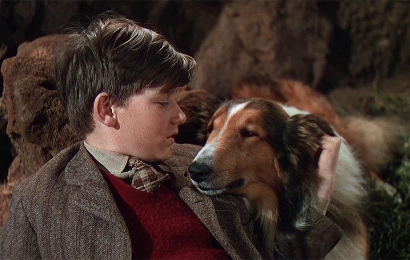 لسی به خانه بازمیگردد ۱۹۴۳ حیوانات خانگی